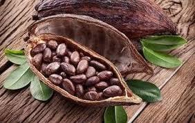 v22Fstory2Flist2Fimage2F-LUFzoMsoSNf14BzZQvG2F-LUG-O-bwTOIJlktNkIP-cacao201